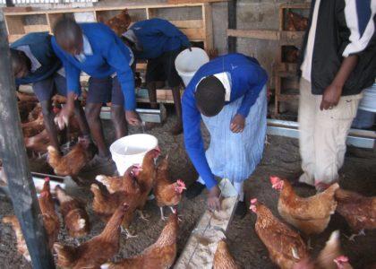 Kaburugi, Kenya (2010): Allevamento pedagogico